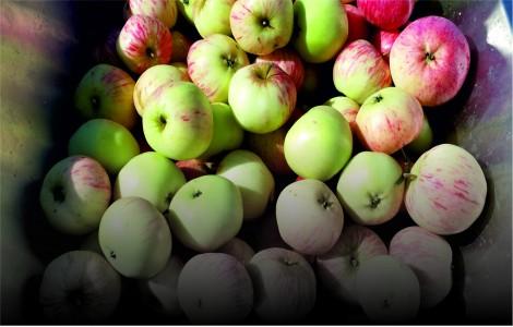 Дробилка для яблок электрическая